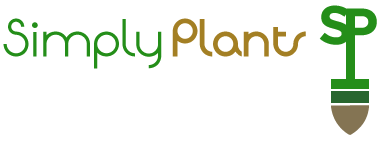 Simply Plants for stunning affordable office plants & plant displays